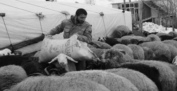 Hayvancılık yapanların kış çilesi