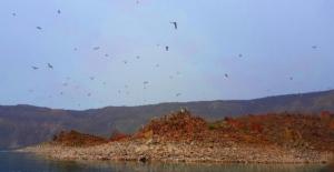 Nemrut Krater Gölü'ndeki 'Martı Adası' keşfedilmeyi bekliyor