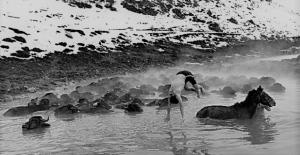 Mandaların dondurucu soğukta kaplıca keyfi