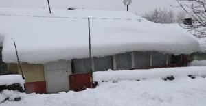 Bitlis'te tek katlı evler kara gömüldü 50'den fazla köy yolu ulaşıma kapandı