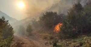Bitlis'teki orman yangını kontrol altına alınabildi